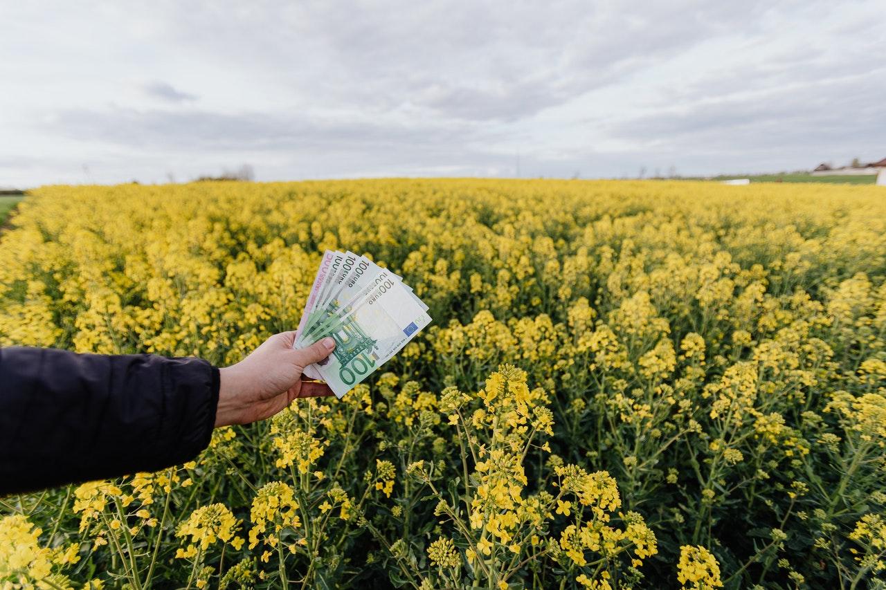 Рекомендации при покупке земли